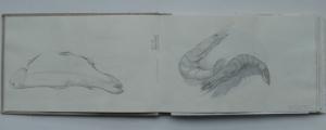 skizzenbuch-1-fische-und-garnelen-1990
